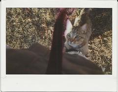 thanksgiving cold (kristencb) Tags: film cat polaroid farm fujifilm damaged leak instax