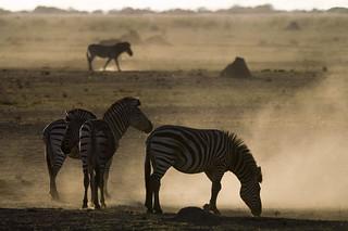 Botswana Okavango Delta Photo Safari 83