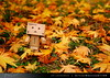 danbo_002 (iskandarbaik) Tags: park uk autumn trees england tree cute home forest toy photography leaf woods bokeh outdoor manga cardboard autumnal yotsuba danbo danbooru revoltech danboard cardbo danboru