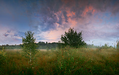 22:30 (Aleksandr Matveev) Tags: travel trees sunset sky panorama tree grass fog landscape cloudy russia pano pic explore lee rpp aleksandrmatveev czdistagon lee9ndgsoftfilter czdistagon2128ze czdistagoncom