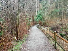 The trail on a grey day (walneylad) Tags: loutetpark northvancouver britishcolumbia canada park parkland urbanpark woods woodland forest rainforest urbanforest trees ferns moss trail bridge grey clouds february winter brown green scenery view nature