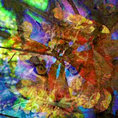 The Wilding (Karen Kleis (Back Sunday!)) Tags: arteffects digitalart photomanipulation wild wilding creativity bobcat abstract blooms sharingart awardtree netartii hypothetical artdigital crazygeniuses