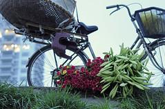 _DSC6921 (ngocnta.1311) Tags: flower while lily flowermarket vietnamflower