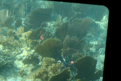 41. John Pennekamp glass bottom boat (Misty Garrick) Tags: johnpennekamp johnpennekampreef johnpennekampcoralreefstatepark coralreef florida keylargofl keylargo floridakeys atlanticocean