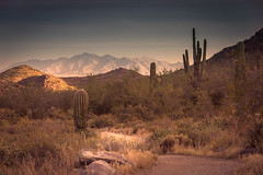 20170409-DSC_5265-Edit (lilnjn) Tags: arizona southwestunitedstates travel unitedstates whitetank