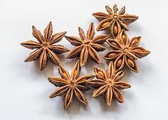 Star Anise Seeds Macro (Coral Norman) Tags: macro monday star anise staranise seeds macromondays members memberschoiceseeds choice nikon d750