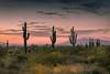 20170320-DSC_4923 (lilnjn) Tags: arizona landscape southwestunitedstates travel unitedstates sky sunrise whitetank