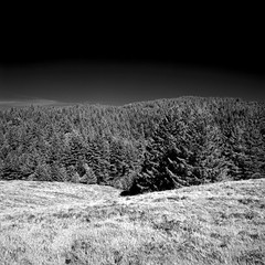 Bountiful (Scott Holcomb) Tags: mttamalpaisstatepark marin california hasselblad500c carlzeissdistagon14f50mmtlens hoya67mminfraredr72filter 50mmto67mmhasselbladfilteradapter rolleiinfrared400film blackwhiteinfrared 6x6 120film mediumformat epsonperfectionv600 photoshopdigitalization