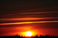 MDD_1667 (Dmitry Mahahurov) Tags: sunset sun russia tosno d300 mahahurov тосно небо закат