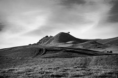 112 of 365 (westindiangal) Tags: ca ©jeanchristopher allrightsreserved sony bayarea places a7ll sonoma hills landscape bw blackandwhite