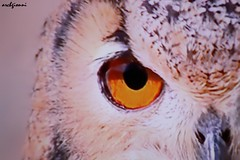 eye (archgionni) Tags: animali animals uccelli birds occhio eye giallo yellow natura nature