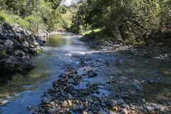 Approaching Cascade Falls (Don Dunning) Tags: cascadecanyonopenspacepreserve cascadefallstrail elliottnaturepreserve marin sananselmocreek water landscape