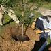 Highland_Renaissance_Tree_Planting_Event_2017 (62)