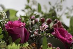 Flower power (celis.marianne) Tags: fragile tender rose bouquet closeup macro flora drops roses flowers