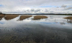 Kenfig Pool Waterscape (Andy.Gocher) Tags: andygocher canon100d canon1018mm uk wales southwales porthcawl kenfig nationalgeographic nature reserve water clouds sky reflection ngc reeds