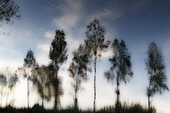Abstract (jc.mendo) Tags: jcmendo canon 7d 35mm reflejo reflejos reflection reflexion arboles rio river agua water nubes invertida