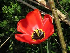 IMG_7119_Fotor01 (Ela's Zeichnungen und Fotografie) Tags: hannover landschaft natur blume pflanze äste sonnenlicht schatten
