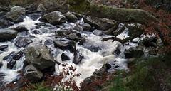 River Brann, The Hermitage, Dunkeld (Niall Corbet) Tags: scotland perthshire dunkeld hermitage nationaltrust nts winter river brann