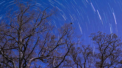 Star Trails from our backyard (csuper) Tags: milkyway astro astrophotography stars ozarks arkansas trees
