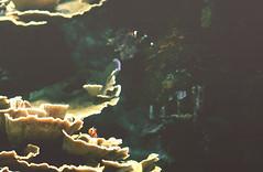 Oceanogràfic (Gatosaurio) Tags: penguin animal libre aire paisaje landscape beach playa sun twilight crepúsculo atardecer sunset water agua valencia orange naranja azul blue backlight black white blackandwhite bw man boy beard cigarette smoke hands sunglasses glasses gafas barba hombre chico cigarro fumar arena sand olas wave invierno winter lake lago loch night noche girl woman mujer chica blond rubia lips pretty gorgeous beautiful linda fisheye ojo de pez eyes hair wind wild parelló smile happy serious love