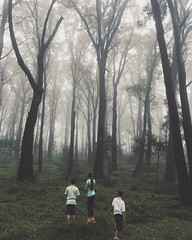 Don't go into the woods. (faerymama) Tags: fairytale enchanted woodlands woodland australianbush forest spooky creep haunting misty foggy fog mist bowral southernhighlands australia