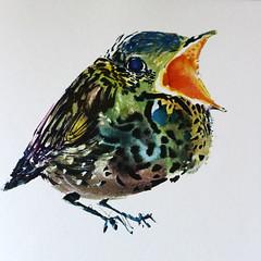 Little Bird. (Kultur*) Tags: vintage vintagebook books childrensbooks fiction drawings illustrations brianwildsmith wildsmith picturebook childrensbook firstedition 1960s bird babybird