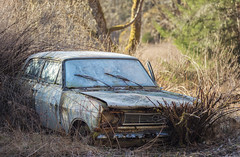 55/17  - frozen - (mariburg) Tags: lostplaces abandoned rotten marode forgotten ruin decay desolate derelict cars rustycars auto canoneos5dmarkiv canonef70200mmf28lisiiusm