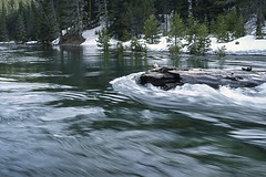 Truckee River (San Francisco Gal) Tags: water log truckeeriver conifer river rapids ripples reflections