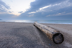 _DSC3035 (phatwhistle) Tags: sleepingbeardunes tree beach michigan plattepoint lakemichigan clouds sky sunset sand benziecounty driftwood greatlakes log wood tokina wideangle nikond5000 nikon
