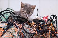 castelsardo (heavenuphere) Tags: castelsardo sassari sardegna sardinia sardinie italia italy europe island cat fishing net nets 24105mm