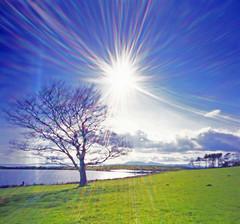 Fairlie Frolicks (wheehamx) Tags: pinhole crosbie reservoir flare