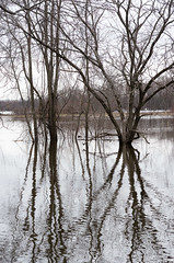 Tree Reflections (Bill McBride) Tags: newengland spring flood landscape easthampton river nature water connecticutriver outdoors massachusetts pioneervalley oxbow