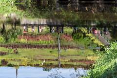 DSC_1499_LowRes (baileym925) Tags: lamesaecopark manila philippines qc nature