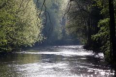 La rivière (martine_ferron) Tags: lernée rivière matin printemps arbre