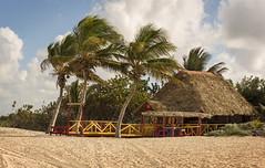 (Oscar Mouriño) Tags: choza playa palmeras beach cuba cayo coco