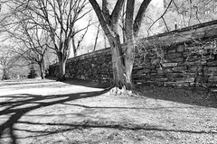 Stone Wall (Joe Josephs: 3,122,834 views - thank you) Tags: landscapephotography manhattan nyc newyorkcity spring travel travelphotography floral flowers joejosephs urbanexlporation urbanparks ©joejosephs2017 blackandwhitephotography blackandwhite relaxation parks relax tranquil outdoorphotography landscapes springtime springcolor