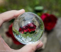 Glass Ball-3 (SMPhotos2548) Tags: glass glassball ball newark newarknj nj newjersey rose park orb
