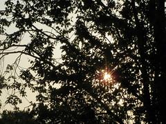 Sunshine Through The Tree Leaves. (dccradio) Tags: lumberton nc northcarolina robesoncounty outdoors outside morning goodmorning foliage silhouette tree trees leaves leaf treelimbs sun sunshine sparkle sunrays morningsun sky sticks branches nature natural landscape