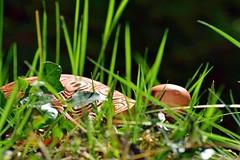Retour à la nature (domlarigauderie) Tags: fantaisie nature tortue environnement décoration extérieur jardin printemps macro nikon d5300 fancy tortoise environment decoration outside garden spring
