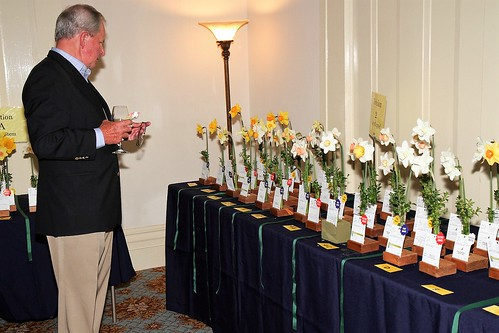 A Drift of Daffodil Winners!