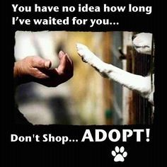 IVE WAITED FOR YOU ADOPT (dflmanagement) Tags: dog rescue cat animal pet shelter adopt breeder