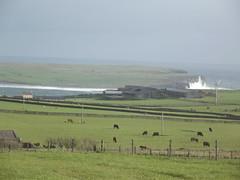 143/365 (Owen H R) Tags: sea storm landscape orkney wind owenhr