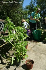 Gardening (Catherine Laight) Tags: grandma summer plants tomato gardening photoaday canon350d deacon 2013
