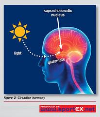 Circadian harmony (sportEX journals) Tags: sleep medicine rehabilitation swr sportsmedicine sportex sportstherapy sportexmedicine