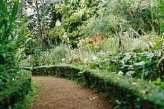 garden pathway (Janet) Tags: flowers film 35mm garden southafrica 50mm flora stellenbosch stellenboschbotanicalgarden
