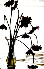 Shadows and Silhouettes 30/52 (lemanie73) Tags: flowers silhouette gerbera daisy gerberadaisy weekofjuly22 52weeksthe2013edition 522013