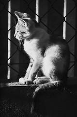 A kitten, explore (la cegna) Tags: