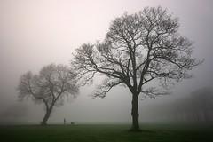 .TM (Digital Diary........) Tags: uk mist dogs fog mood atmosphere walker sthelens dogwalking merseyside sherdleypark