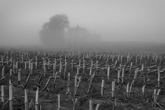 Homestead Fog