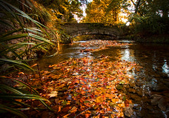 Autumn in Tromode (Heathcliffe2) Tags: autumn red leaves colours isleofman tromode